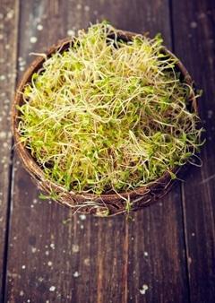 Alfalfasprossen in einer Schüssel auf einem Holztisch