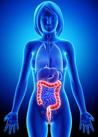 Anatomie des Verdauungssystems, weiblich