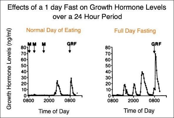 Auswirkungen des Fastens auf das Wachstumshormon