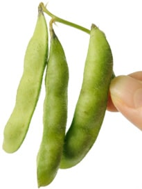 Finger halten frische Sojabohnen