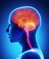 Beleuchtetes menschliches Gehirn