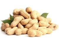 Leckere Erdnüsse mit Blättern
